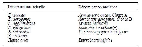 the characteristics of enterobacter aerogenes a type of bacteria Bacteria of the enterobacter genus are facultative anaerobic gram-negative strains  due to common characteristics,  enterobacter cloacae, enterobacter.