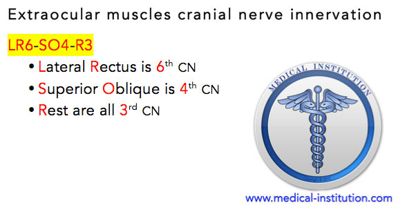 Extraocular-muscles-cranial-nerve-innervation-Mnemonic-USMLE-Step - patient care technician job description