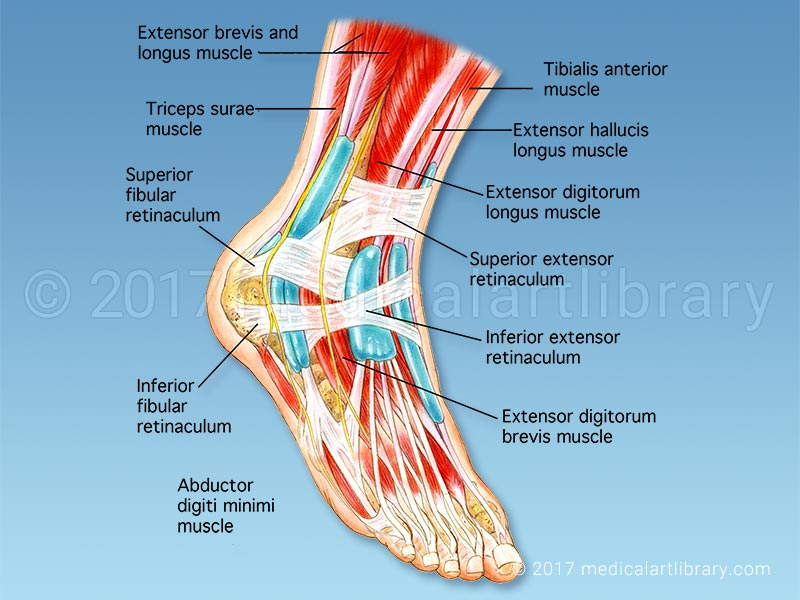 Singapore Foot Specialist Clinic Singapore Sports and Orthopaedic