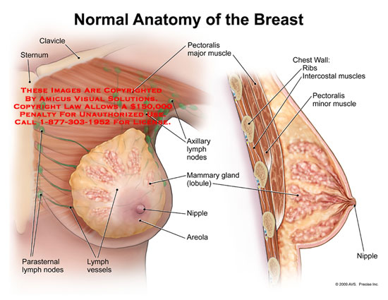 AMICUS Illustration of amicus,anatomy,breast,clavicle,sternum