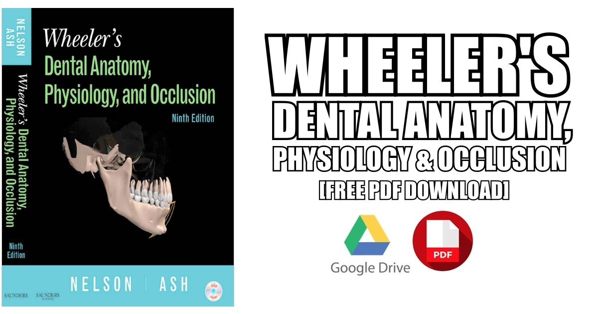 Contemporary Dental Anatomy Wheelers Elaboration - Image of internal ...