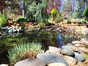 Babaji pond