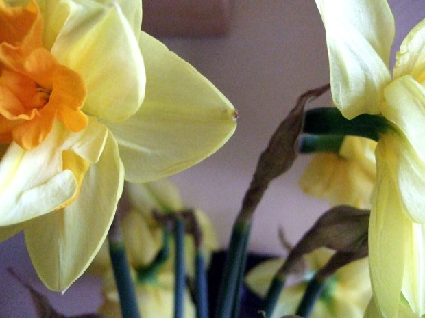 daffs-in-the-home