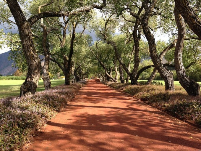 trees_kenya-680x510