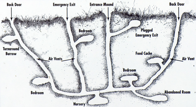 rabbit burrow diagram rabbit burrow diagram