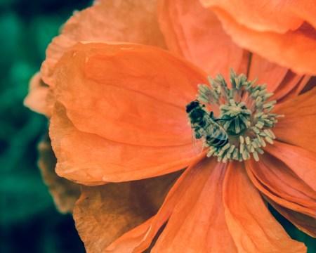 Flowers Creative-59