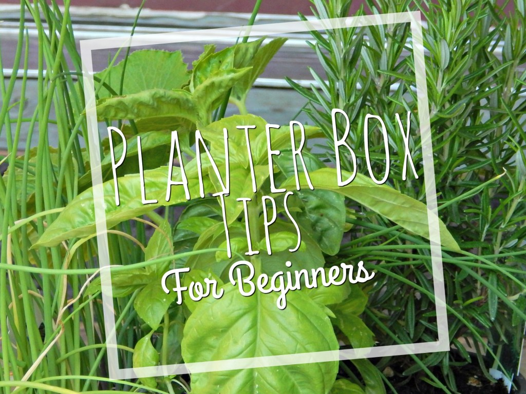 planter box tips