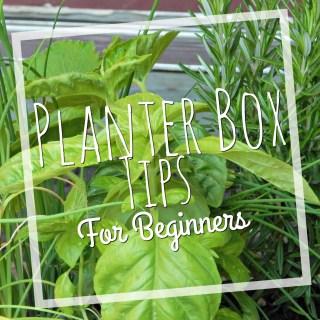 planter box tips
