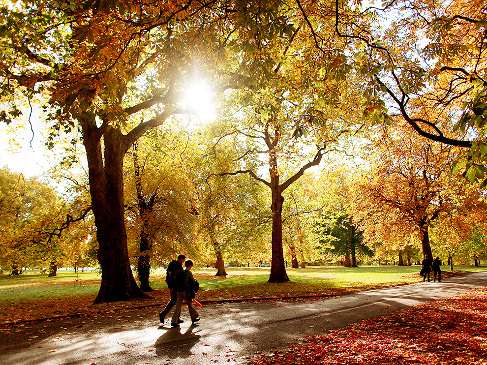 Falling Leaves Live Wallpaper London In Autumn Events In London The Melita