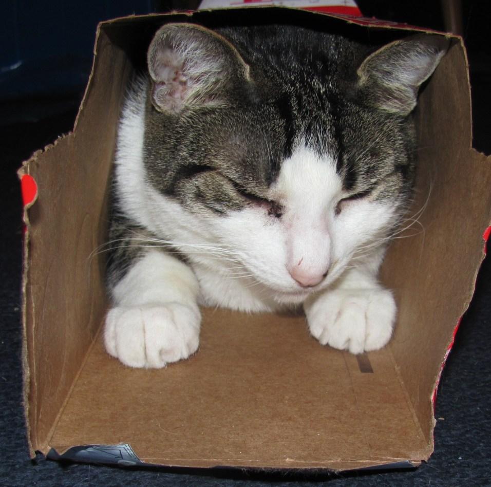 James in Box