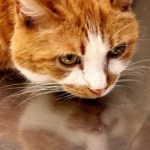 A Tough Day – a tearful good-bye to our cat, Simon