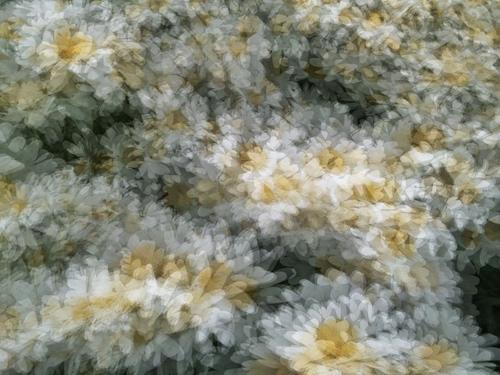 Daisy Chain © lynette sheppard