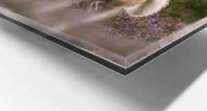 foto-tussen-plexiglas-dibond