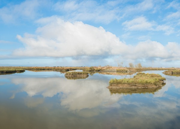 McDaniel Slough, Two Hours Thirty Minutes Before King Tide, Arcata Marsh, California, 2015.