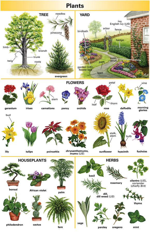 Garden - Definition for English-Language Learners from Merriam - count and noncount nouns esl