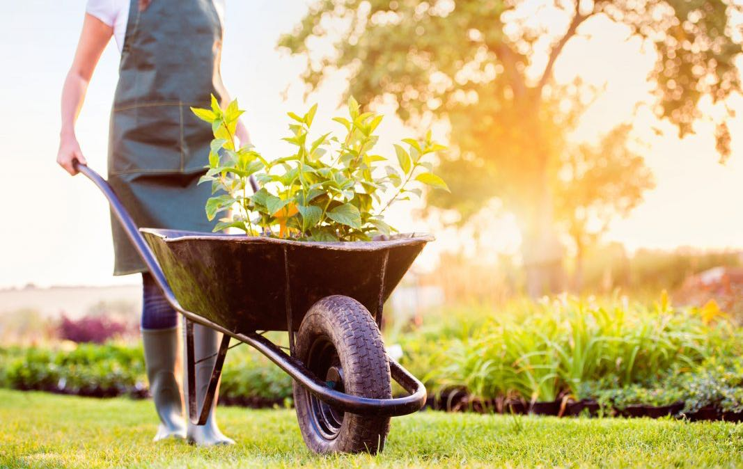 Resources - Merrifield Garden Center