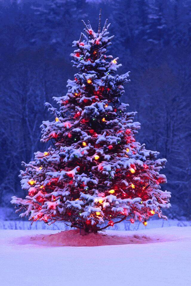 Christmas Tree Images, Pictures, Photos, Pics, HD Wallpapers Free