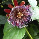 Another picture of a pretty flower at the National Botanical Gardens.