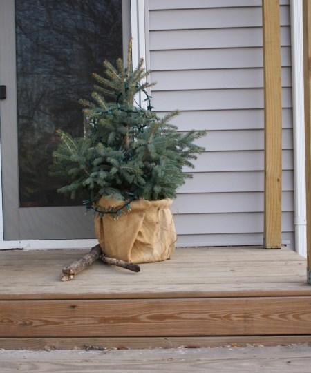 Mini-tree, relocated.