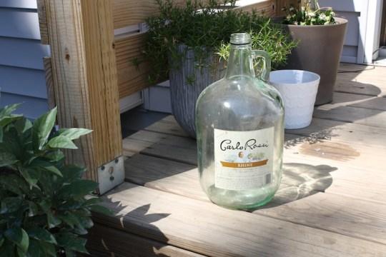 Freebie wine jug, found curbside. Is that too gross?