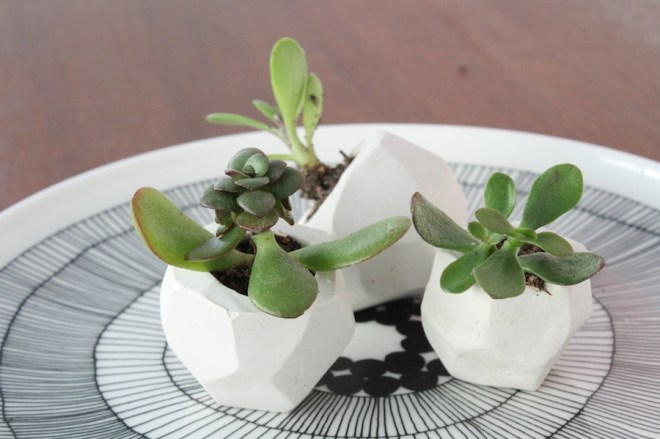 Cute little wedding favors using DIY clay planters and succulents.