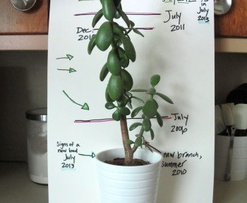 Jade growth, July 2013.