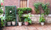Patio Container Vegetable Garden Ideas