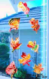 Contact Paper Window Stickers - Fall Leaves - Mess for Less