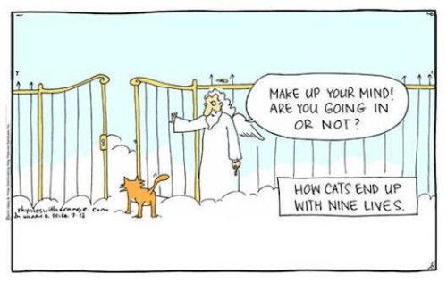pearly gates cat2
