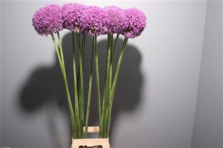 Long Lasting Flowers Archives - Metropolitan Wholesale