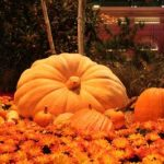 big-pumpkin-1080p-wallpaper-middle-size