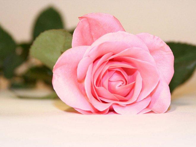 Red Rose Love Quotes Wallpapers Images صور عن الحب والغرام صور حب رومانسية جميلة ميكساتك