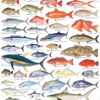 all fish name - Name 15 Kinds of Fish