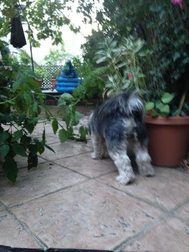 Frasier, my son's dog, doing some exploring