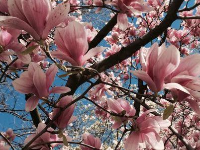 central park flowers5
