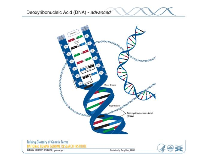 Fact Sheet DNA-RNA-Protein \u2013 microBEnet the microbiology of the