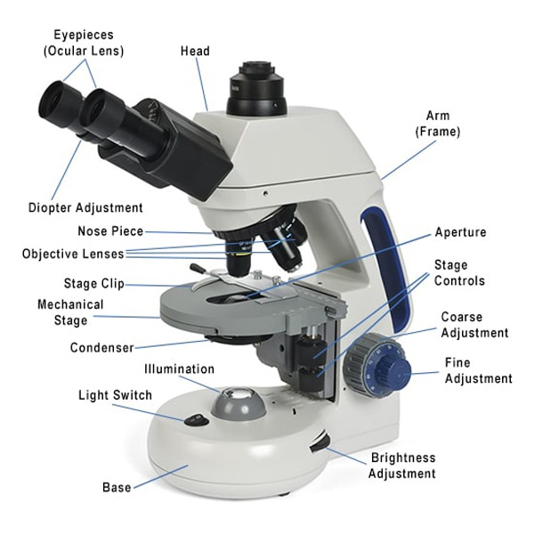 What is a Compound Microscope? - New York Microscope Co