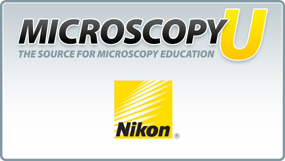 Polarized Light Microscopy MicroscopyU