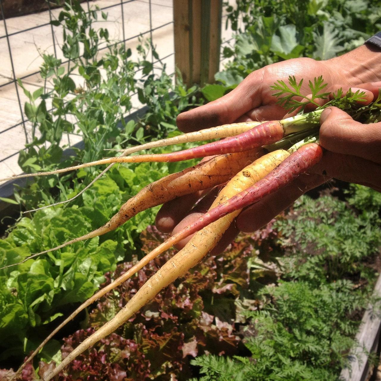 fruit, flowers, herbs & veges