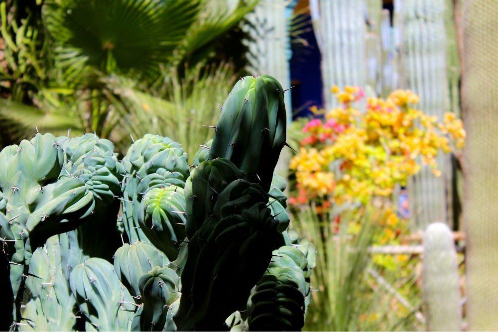 Jardin majorelle blue oasis marrakech morocco for Jardin yves saint laurent maroc