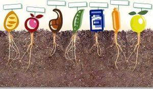 Consumo ecológico alimentación bio orgánicos