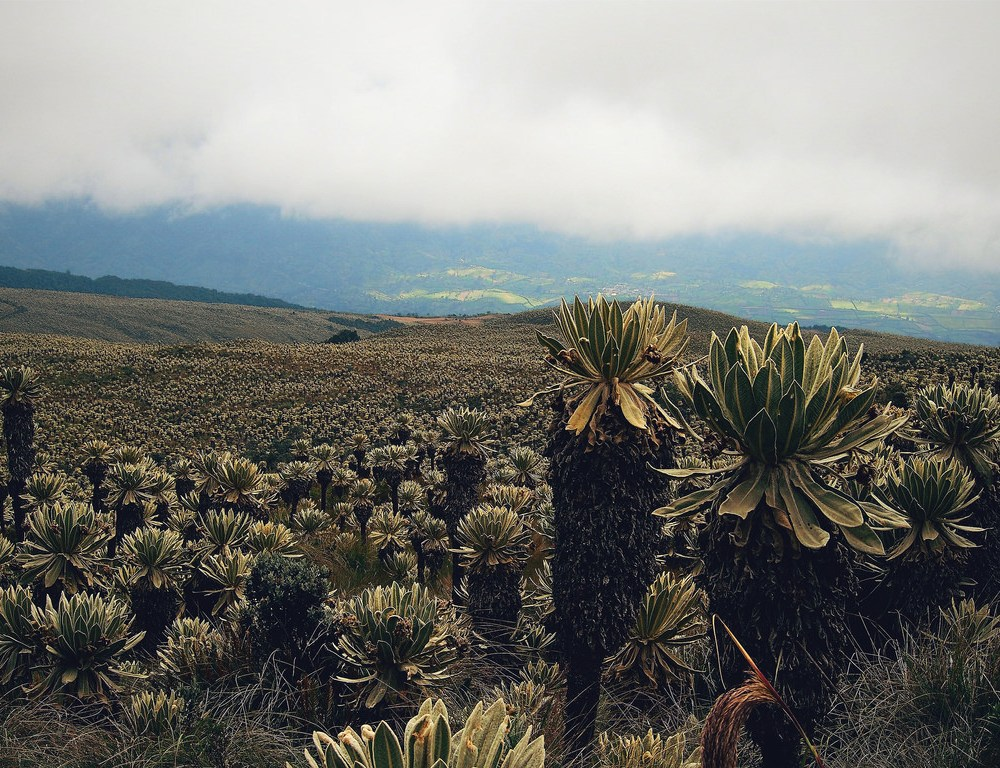 Ecuador: City Life, Amigos and Frailejones