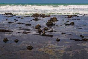 The tide goes out at Curio Bay to expose the fossil stumps and fallen logs of New Zealand's Jurassic fossil forest.