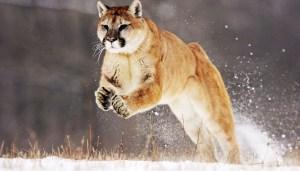 Credi ai cinesi? Sei un tifosotto e meriti l'attacco del Puma!