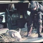 Jaeger_ One of war's lighter moments. German soldiers and plane; pig of undetermined nationality. 1944