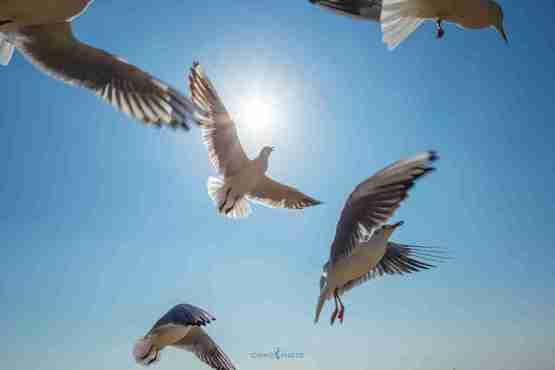 Birds_1024x683