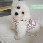 Dog T Shirt Pattern