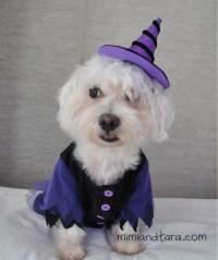 Dog witch costume patterns | FREE PDF DOWNLOAD