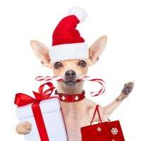 Christmas Dog Clothes - Best Dog Xmas Outfit