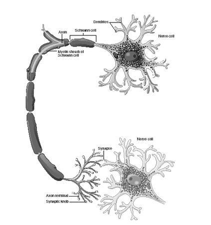 Neurotransmitters - causes, effects, drug, people, used, brain